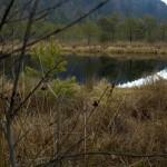 Tinovul Mohos - mlastina, lacul de muschi