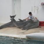 delfini 11