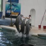 delfini 3