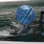 delfini 4