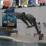 delfini 8