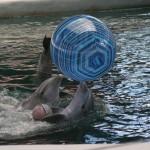 delfini pasa