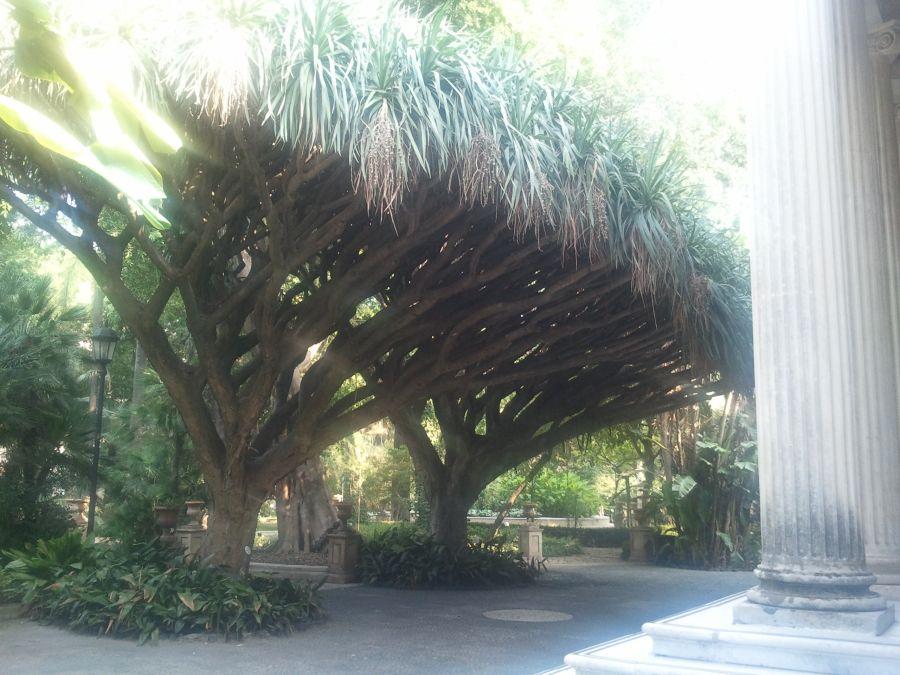 in gradina botanica din Catania