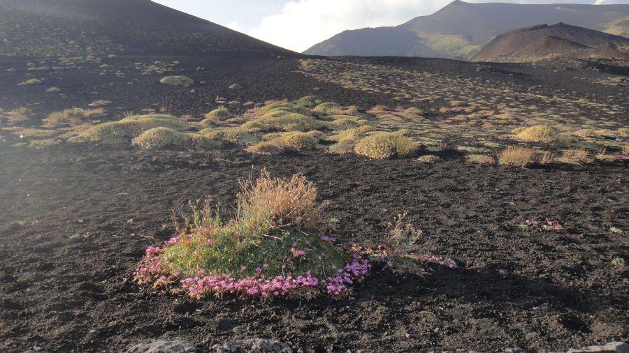 flora Etnei
