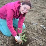 plantare Cosmote Romania