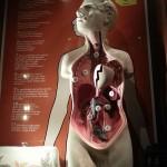Anatomia-Suferintei